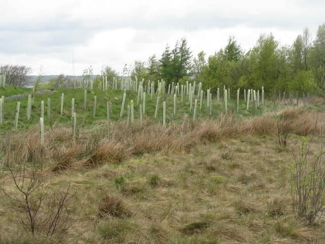 New woodland planting at Springhill