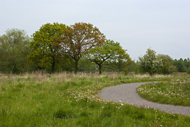 Windy Bank Wood