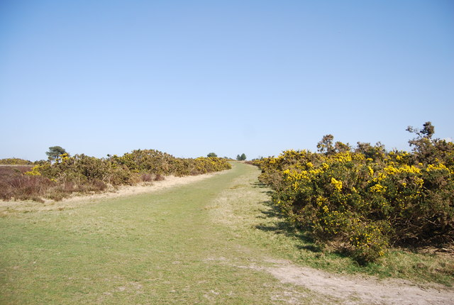 Track on Ashdown Forest