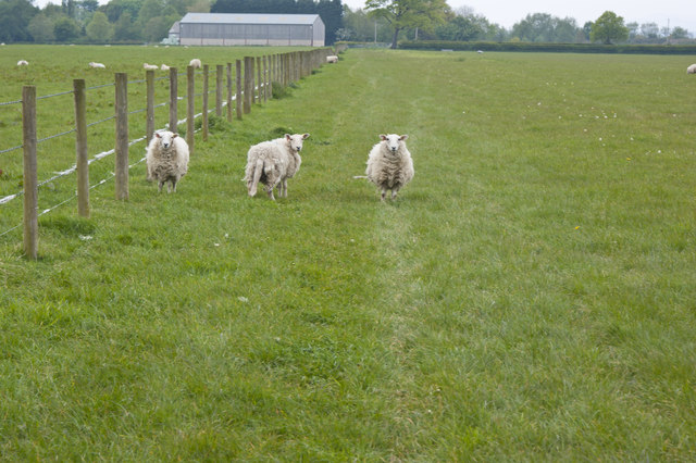 Are you baa-ing my way?