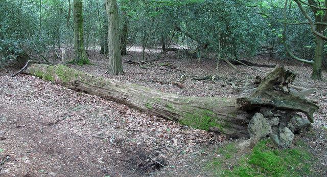 Fallen trunk with moss