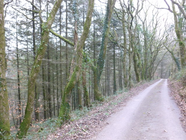 Access road and footpath leading from Coed Las-fach