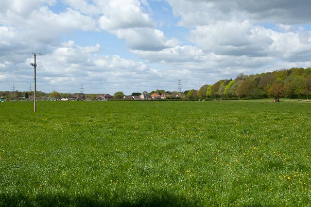 Fields north of Hambledon Road