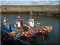 NT6879 : Old Harbour, Dunbar : Week 21