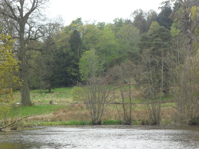Woodland at the edge of Blair Drummond Safari Park