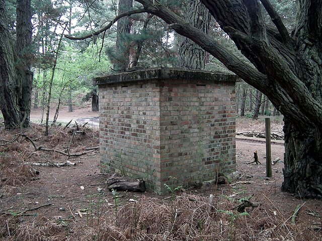Brownsea Island bat roost