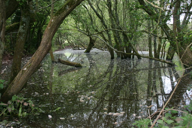 The old canal below Runnington