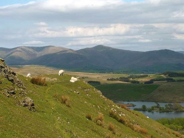 Sheep on Summerhouse Hill