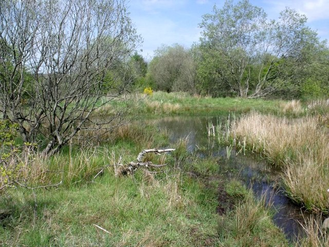 Cumbernauld, Ravenswood Local Nature Reserve [12]