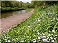 SK0048 : Wild flowers beside the Caldon Canal by Graham Hogg