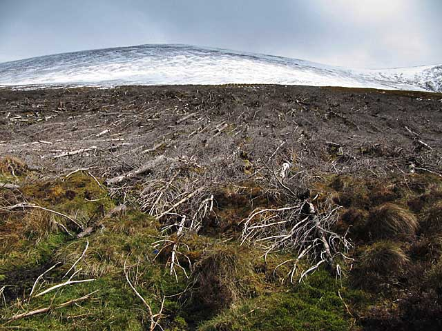 Felled trees on Ben Wyvis