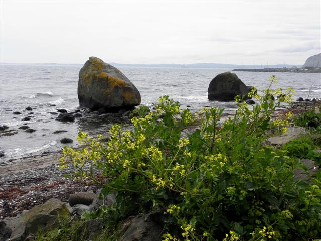 Large boulders, Whitehead