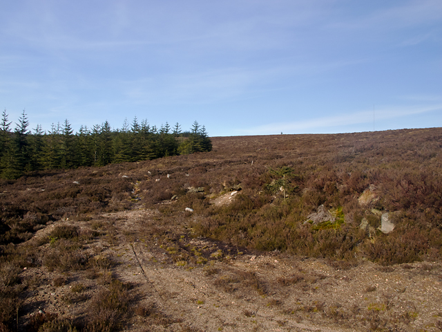 Heathland north of Tipperweir