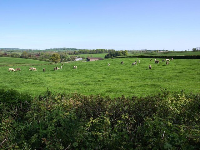 Grazing land next to the A30, looking towards Whitestaunton