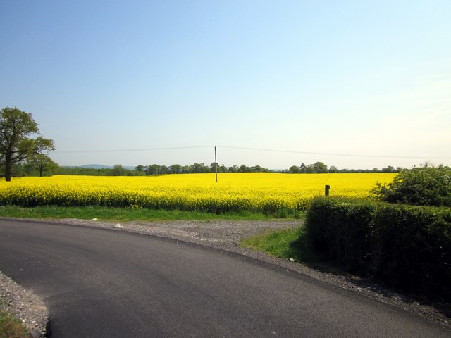 field of oil seed rape near walk mill jeff buck geograph britain and ireland. Black Bedroom Furniture Sets. Home Design Ideas