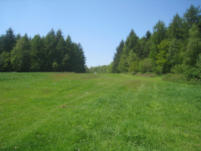 Open area - The Holt