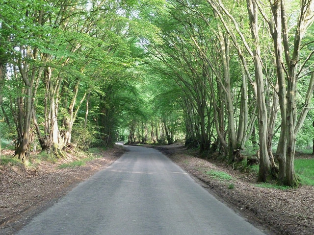 Kiln Road - Spring beeches