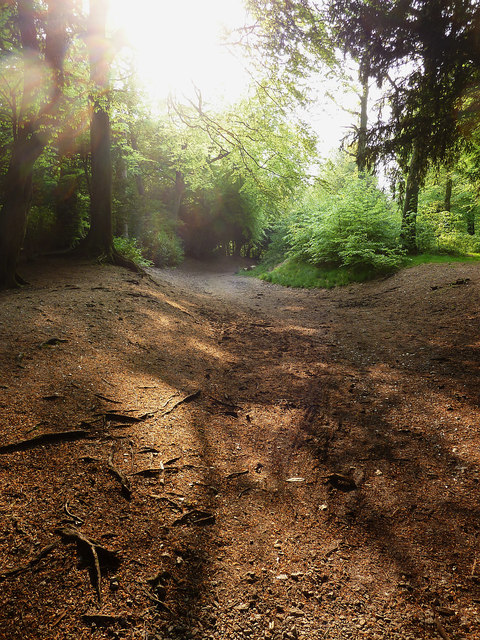 Footpath,  Wendover Woods
