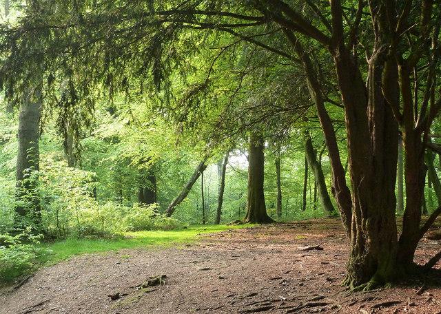 Glade in Wendover Woods