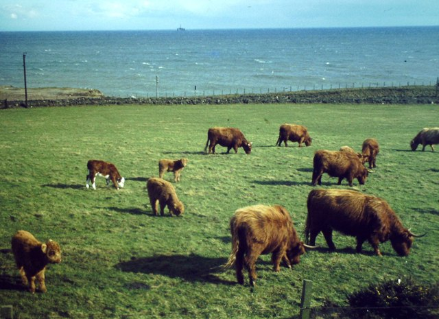Highland Cattle, Doonies