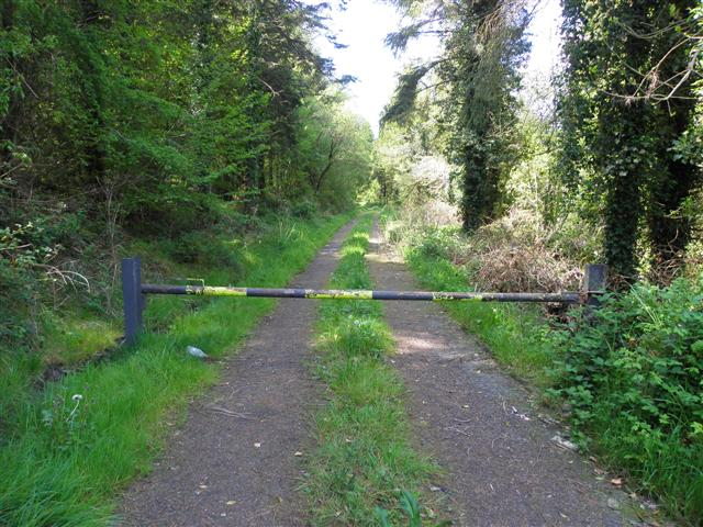 Forest road, Knockcor