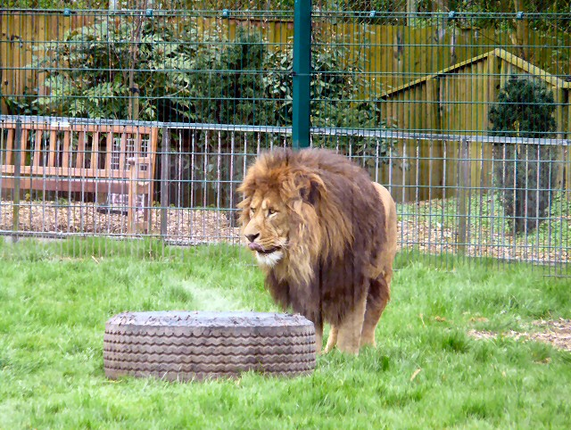 Wallace at Blackpool Zoo