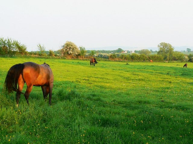 Horses in a field, Great Coxwell, Oxfordshire