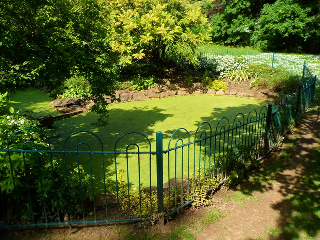 Slime-covered pond, Belle Vue Park, Newport