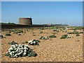 TM3236 : Martello tower and sea kale at Old Felixstowe beach : Week 21