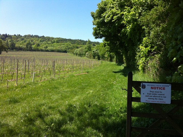 Denbies vineyard from footpath 32