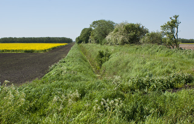 Ditch, field boundary and oil seed rape