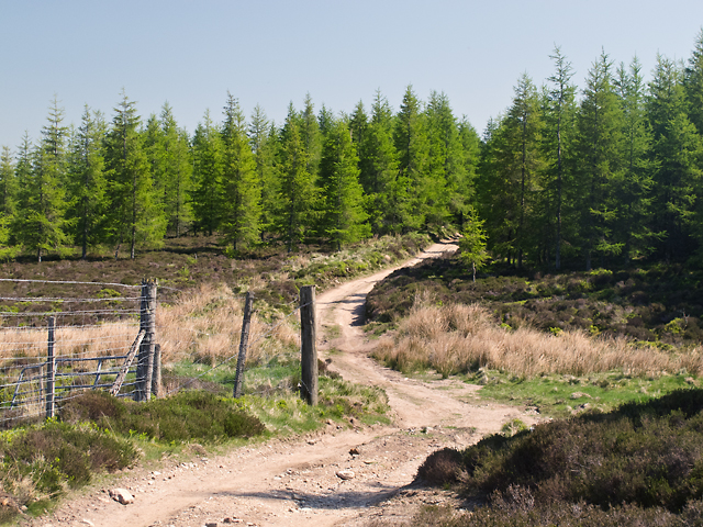 Track on Brunt Hill