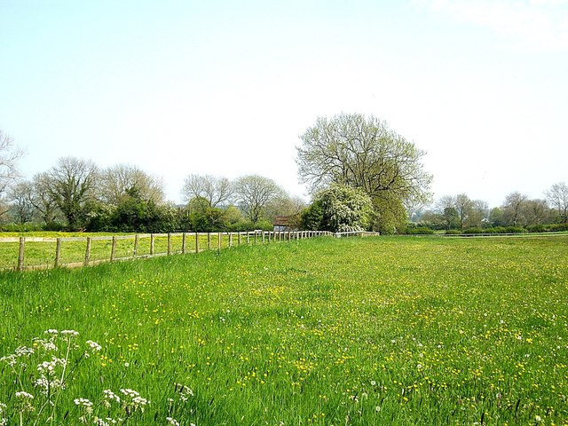 A flower meadow in May