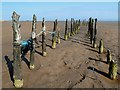 NX9155 : Old posts on Mersehead Sands by Walter Baxter