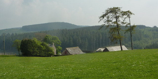 Meadow by Upper Esgair Farm