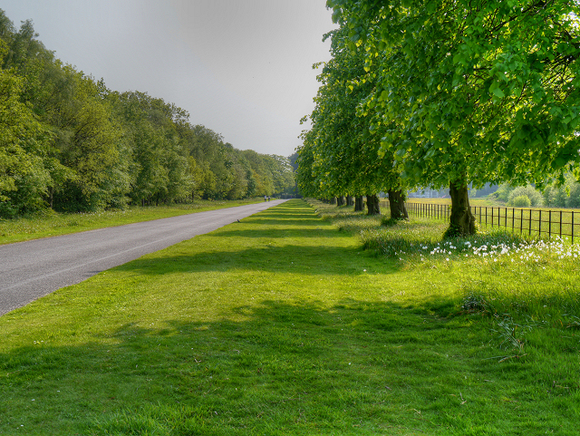 The Driveway To Speke Hall