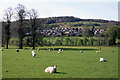 SK3056 : Houses and Sheep, Cromford by Des Blenkinsopp