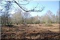 TQ4726 : Open woodland near Fairwarp by N Chadwick