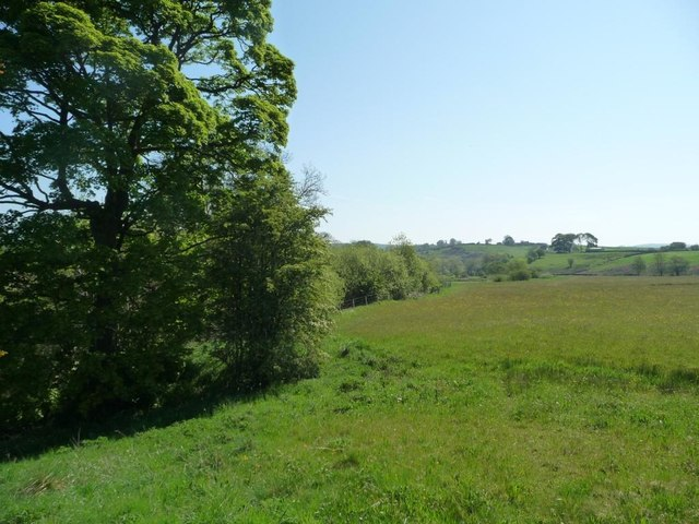 Meadow on the south side of Black Brook