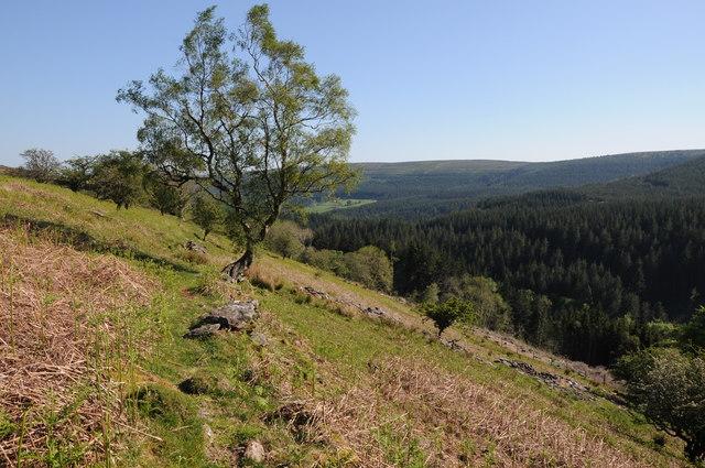 Tree in Cwm Grwyne