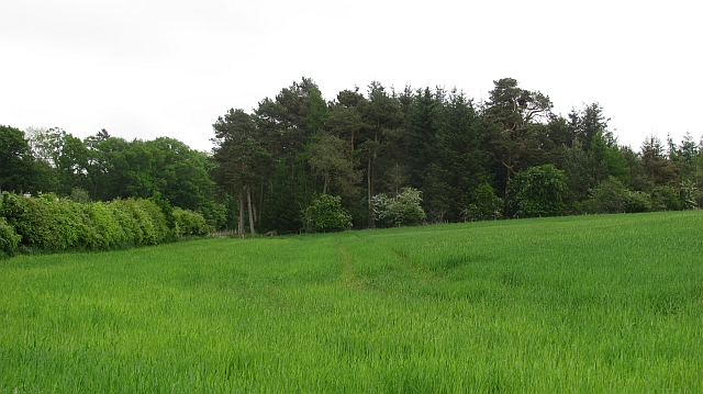 Barley field, Whitslaid