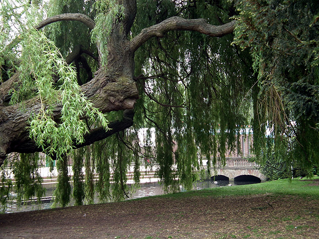 Beneath a weeping willow in the grounds of St Mary's Church, Hitchin