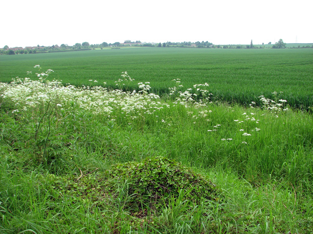 Cultivated fields north of Cadenham Road