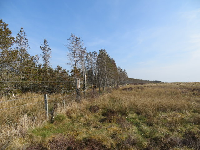 Tree and fence line on the plantation at Loch Olginey
