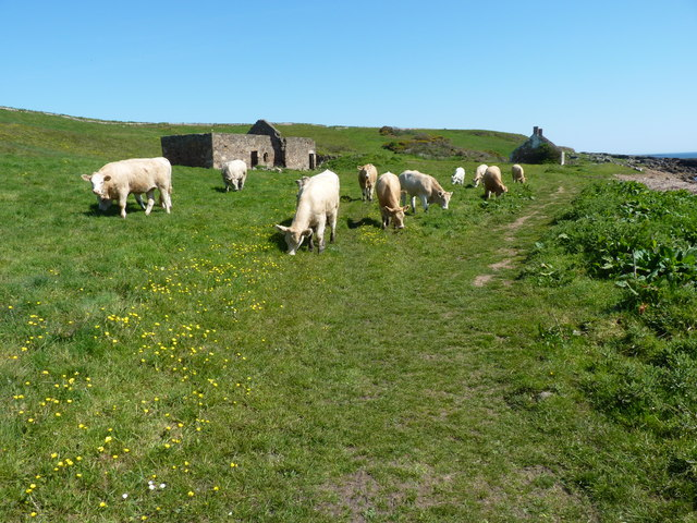 Path, Pans and cows