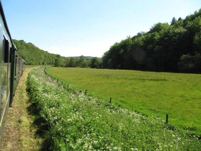 Flowery meadow in the Churnet valley