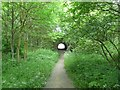 SJ8590 : Trans Pennine Trail by Gerald England