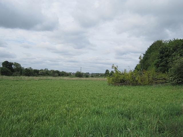 Wetland, Springfield
