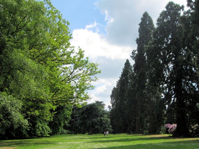 An Avenue in the Gardens at Ashridge House