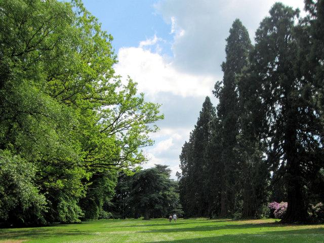 An Avenue in the Gardens at Ashridge House